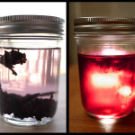Make It: Hibiscus Infused Tequila